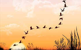 17_migraciones
