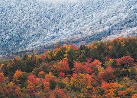 Trees in forest during Autumn partially covered in snow, Vermont, New England, Usa